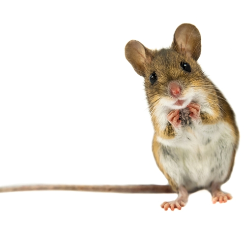 Don't let rodents take over your home this winter.