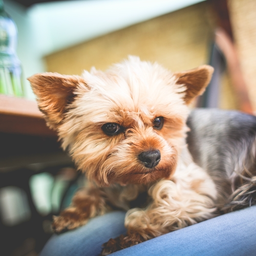 Here are some tips to help furry friends acclimate to a new home.